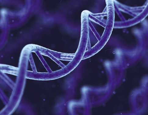 Halal & GMO Testing
