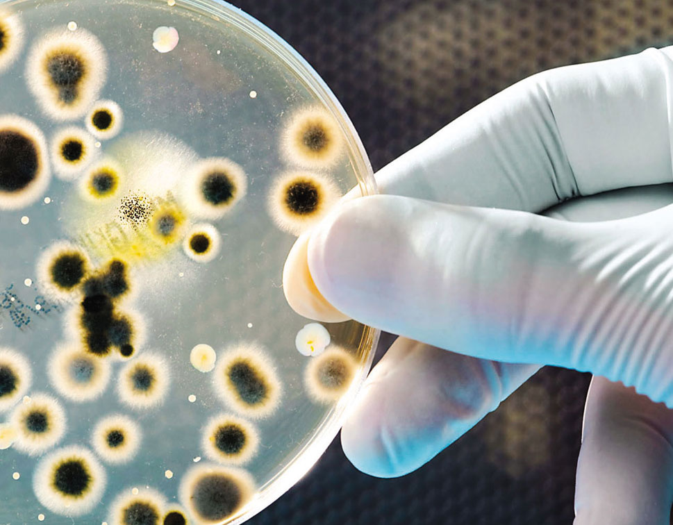 Microbiological Testing